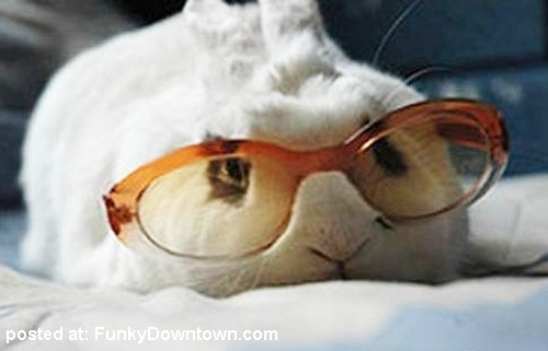 Animals with sunglasses - photo#23