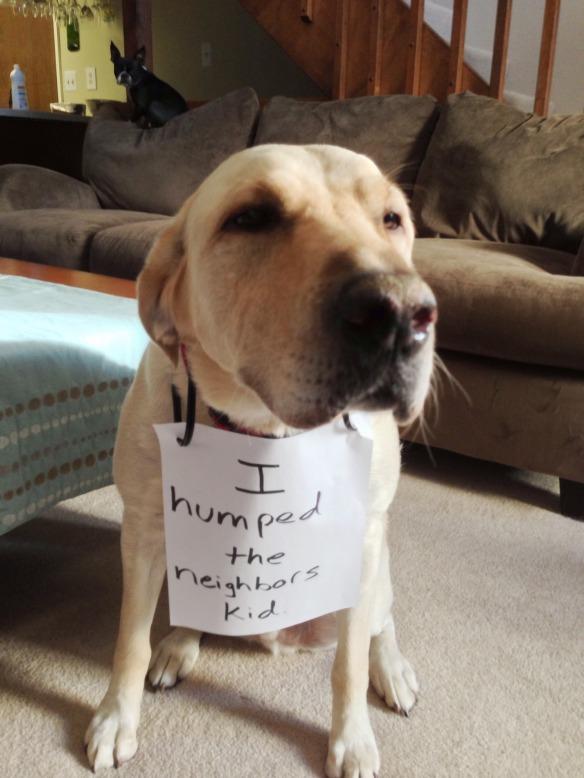 Dog-Shaming-Jan06