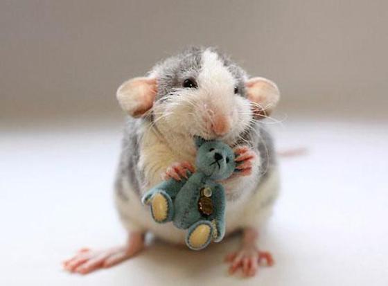rats-with-teddy-bears-ellen-van-deelen-3