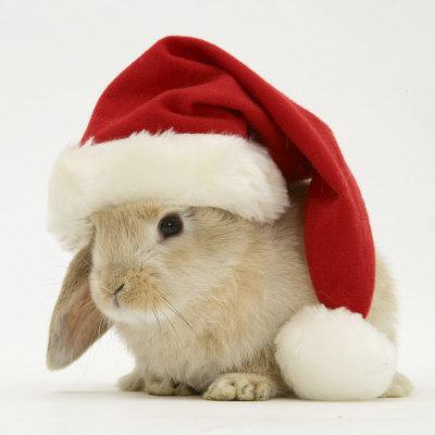 rabbit-xmas