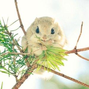 cute-animals-hokkaido-ezo-japan-3