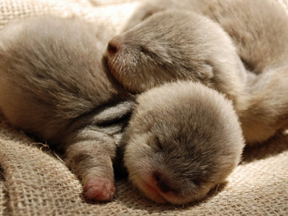 cute-baby-otters-sleeping