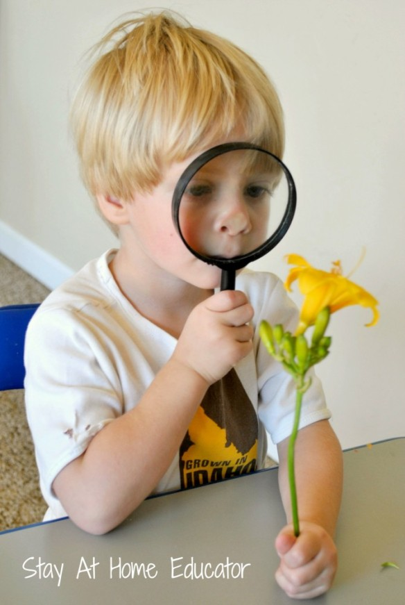 Investing-flowers-while-learning-about-our-sense-of-sight-Stay-At-Home-Educator-670x1000