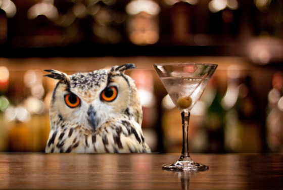 owl-bar